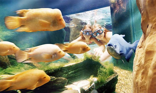 Aqua mundo center parcs de kempervennen dagentree subtropisch