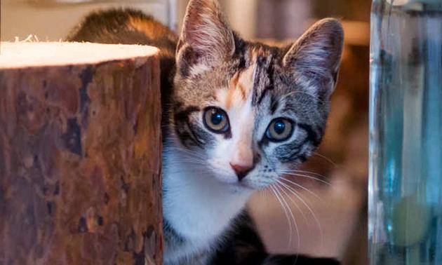 Kattencafé PoesPas
