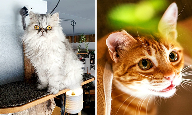 Kattencafé The Coffee Cat