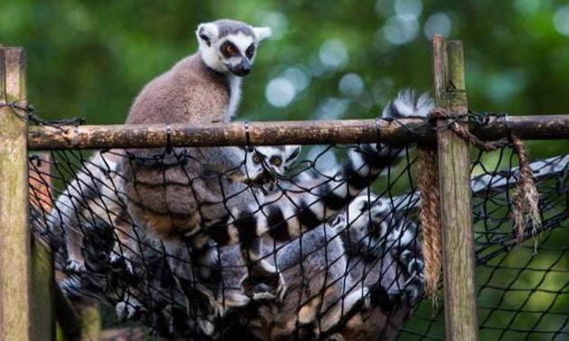 Papegaaienpark Zoo Veldhoven