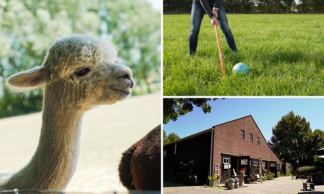 Alpaca & Falabella Ranch Rzadkiewa