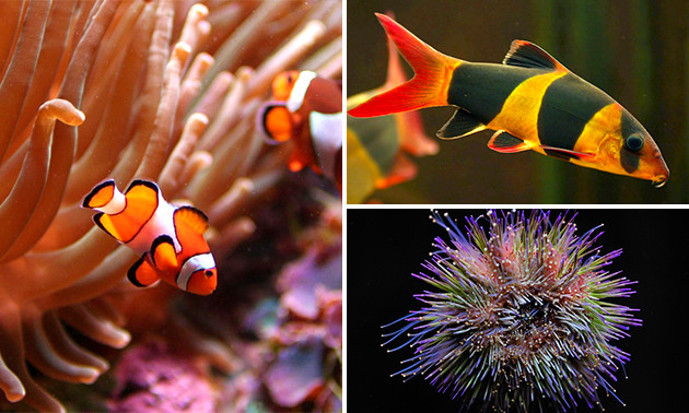 Aquarium van Brussel, Entree voor het Aquarium van Brussel  bespaar 50% in Gent via Social Deal