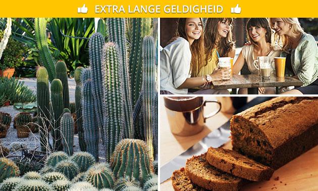 Entree voor Belevingspark CactusOase + arrangement