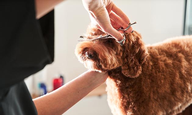 Trimbehandeling voor je hond (2 tot 3,5 uur)