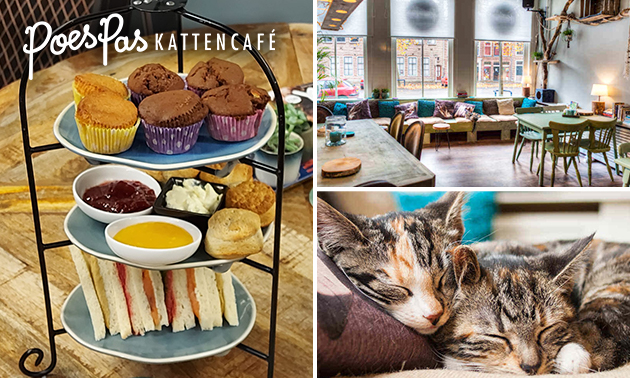 Afhalen: high tea bij Kattencafé PoesPas