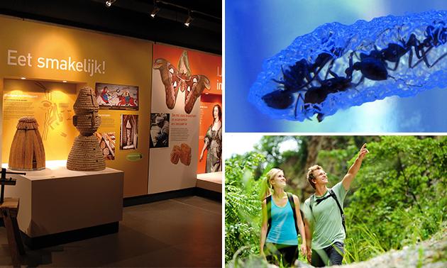 2x entree blotevoetenpad + insectenmuseum