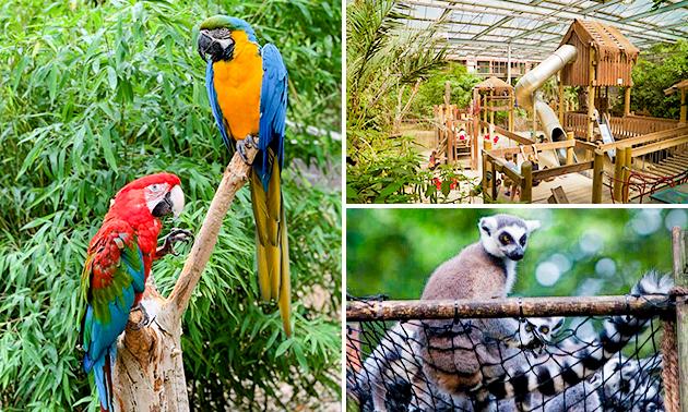 Dagentree of seizoenskaart Papegaaienpark Zoo Veldhoven