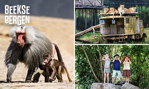 Entree Safaripark Beekse Bergen