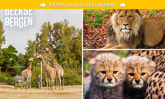 Entree Safaripark Beekse Bergen + warme drank