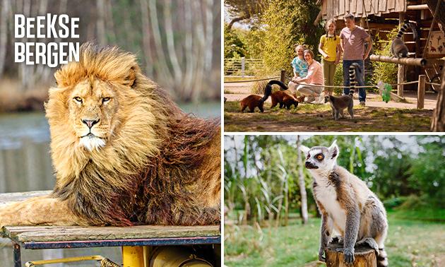 Entree Safaripark Beekse Bergen + evt. warme drank