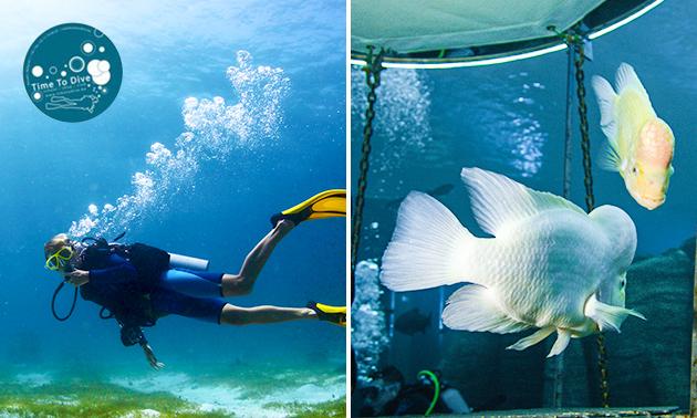 Snorkel-les (2 uur)